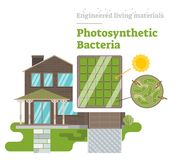 Фотосинтетические бактерии - проектированный живущий материал Бесплатная Иллюстрация