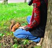 Фотоснимки девушки как красная белка едят гайку в парке в p Стоковая Фотография