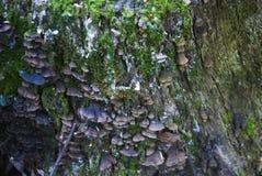 фотоснимок грибка дерева на дереве Стоковые Изображения RF
