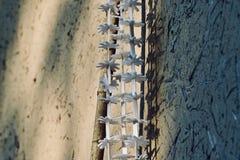 Фотоснимок запаса выставочного образца смертной казни через повешение изолированный объектами Стоковая Фотография RF