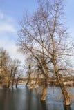 Фотоснимок затопленной земли с плавая домами на Реке Сава - Стоковые Изображения RF