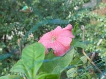 Фотоснимок показывает цветок Стоковые Изображения