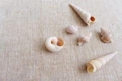 Seashells на linen натюрморте предпосылки Стоковая Фотография