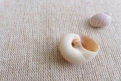 Seashells на linen натюрморте предпосылки Стоковое Фото