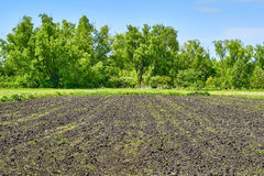 Фотоснимок поля, огорода Стоковые Фотографии RF