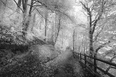 Фотоснимок прогулки полесья черно-белый стоковое фото