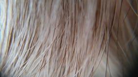 Фотоснимок человеческих волос Стоковые Фотографии RF