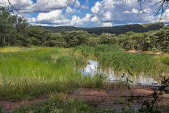 Фото ландшафта над прудом Стоковая Фотография RF