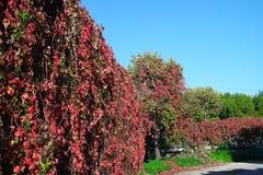 Фото ландшафта осени Стоковые Фотографии RF