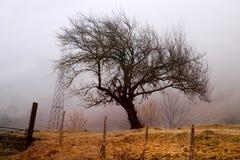 Фото большого красивого дерева в тумане Стоковая Фотография RF
