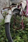 Фото велосипеда природы стоковые изображения
