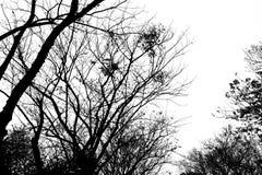 Фото ветвей силуэта деревьев в лесе Стоковое Изображение