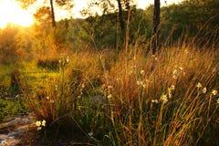 фото взрыва света захода солнца среди цветков в лесе стоковое изображение rf