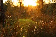 фото взрыва света захода солнца среди цветков в лесе стоковые изображения