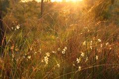 фото взрыва света захода солнца среди цветков в лесе стоковые фотографии rf