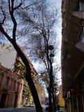 фото 2007 в ноябре природы Бразилии Стоковое фото RF