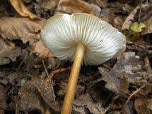 Фото гриба леса Стоковая Фотография RF