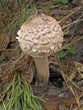 Фото гриба леса Стоковое Фото
