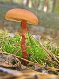 Фото гриба леса Стоковые Изображения RF