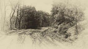 Фото грязи дороги леса старое monochrome Стоковые Фотографии RF