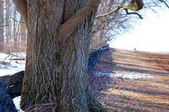 Фото дерева в одном из ` s Делавера паркует Стоковые Фото