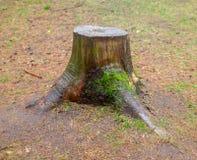 Фото дерева пня Стоковое Изображение