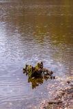 Фото деревянного пня в озере в оранжевом лесе осени Стоковое Фото