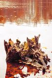 Фото деревянного пня в озере в оранжевом лесе осени Стоковые Изображения