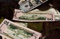Фото долларов и листьев для предпосылки Стоковые Изображения