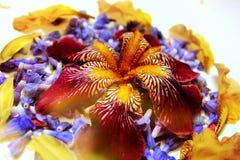 Фото лепестков цветка Стоковые Фотографии RF