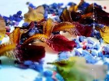 Фото лепестков цветка Стоковое Изображение