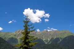 Фото дерева под голубым небом Стоковые Фото