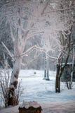 Фото деревьев в снеге Стоковое фото RF