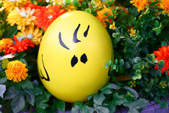 Фото желтых яичек в всеобщей стране чудес Стоковая Фотография