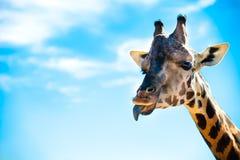 Фото жирафа от отключения к зоопарку Стоковые Изображения