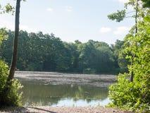 Фото запаса - край конца берега озера вверх по деревьям отразил в воде стоковое фото