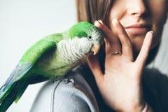 Фото зеленого попугая Quaker сидя на руке ` s женщины стоковая фотография