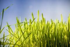 Фото зеленой травы против темносинего неба Стоковая Фотография RF