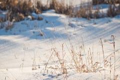 Фото зимы высушенной травы 1015 Стоковое фото RF