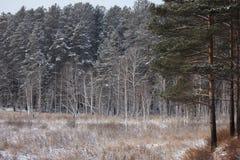 Фото зимы Стоковое Изображение