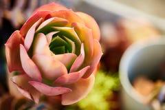 Фото искусства завода кактуса Стоковая Фотография