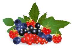 фото иллюстрации пущи ягод реалистическое Стоковое Изображение RF