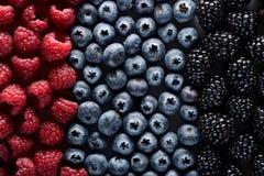 фото иллюстрации пущи ягод реалистическое Стоковые Фото