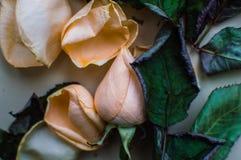 Фото конца-вверх бутона розы с упаденными листьями на розовой пастельной предпосылке Women& x27; концепция дня s Стоковое Изображение RF