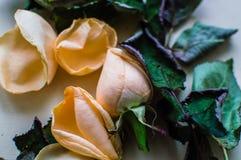 Фото конца-вверх бутона розы с упаденными листьями на розовой пастельной предпосылке Women& x27; концепция дня s Стоковые Фотографии RF