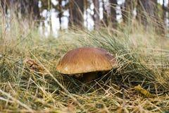 Фото конца-вверх гриба с падениями росы на мхе и betwe Стоковое фото RF