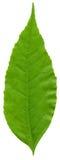 Фото Конца-вверх зеленых листьев Стоковая Фотография