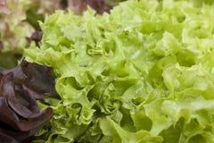 Фото конца-вверх свежих листьев салата Стоковое Изображение