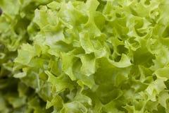 Фото конца-вверх свежих листьев салата Стоковая Фотография