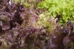 Фото конца-вверх свежих листьев салата Стоковое Изображение RF